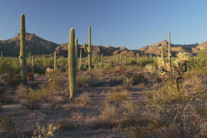 telegraph pass best phoenix hiking trails for travel nurses