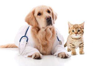 need-pet-insurance-2