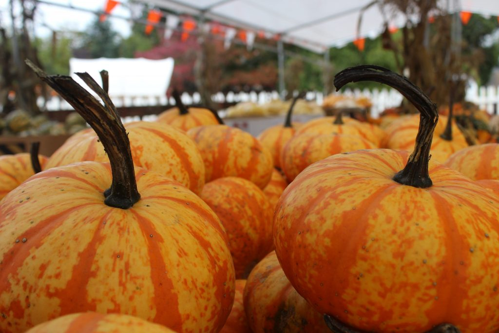 fall festival in upstate new york